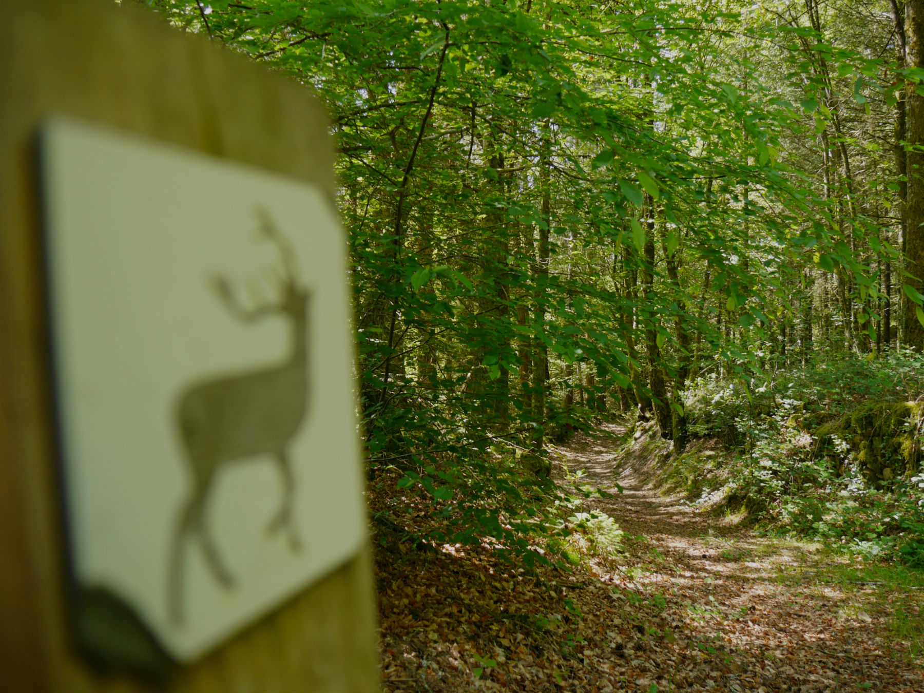 Observatoire du Cerf et de la faune sauvage ©OT Tulle en Corrèze
