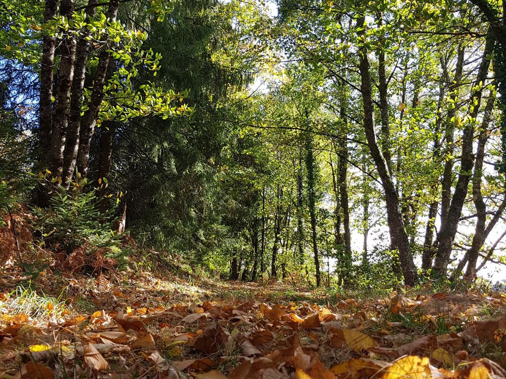 Forêt ©OT Tulle en Corrèze
