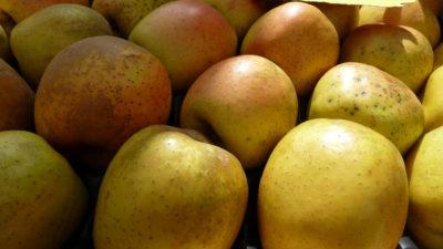 Photo 1 d'appel